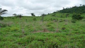 Defensivo recém lançado viabiliza controle de plantas daninhas com menos de 50% do custo da reforma de pasto