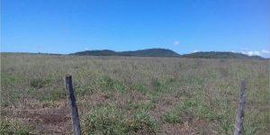 Principal recomendação para não sofrer com falta de pasto na seca é planejamento