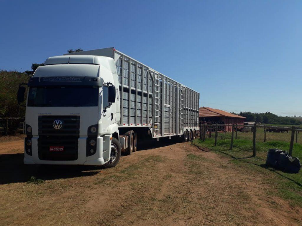 Bem-estar animal: motoristas boiadeiros passam por treinamentos trimestrais para garantir viagens sem estresse