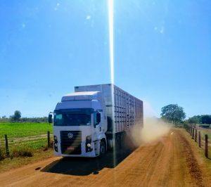 Conheça o ciclo completo do transporte boiadeiro feito na Fazenda Conforto