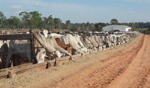 Fazenda do MT aumentou rebanho em quase três vezes aliando tecnologia e manejo