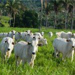 Taxa de lotação em fazenda no MA salta 260% com estratégia de limpeza de pastagem
