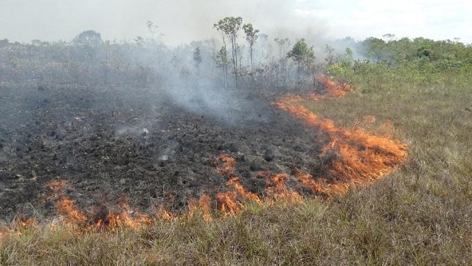 queimada-elimina-90-nutrientes-solo-como-prevenir