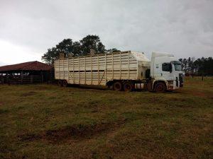Equipes do transporte boiadeiro ajudam pecuaristas a melhorar qualidade de carcaça