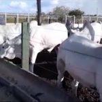 Pecuária da Paraíba passa por momento de tecnificação, destaca veterinário