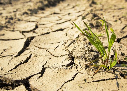 Seca deixa produtor australiano pessimista e rebanho pode sofrer redução nos próximos anos