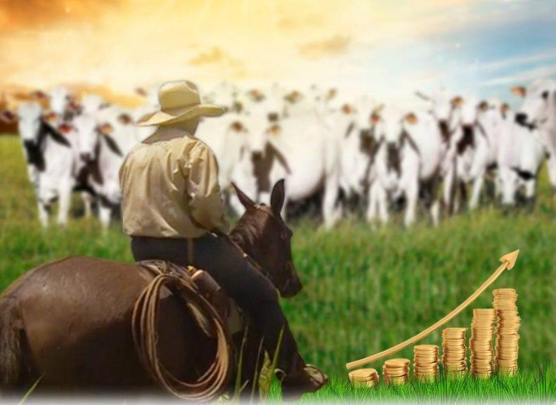 benchmarking-2018-sete-segredos-fazendas-lucrativas-pecuaria-de-corte