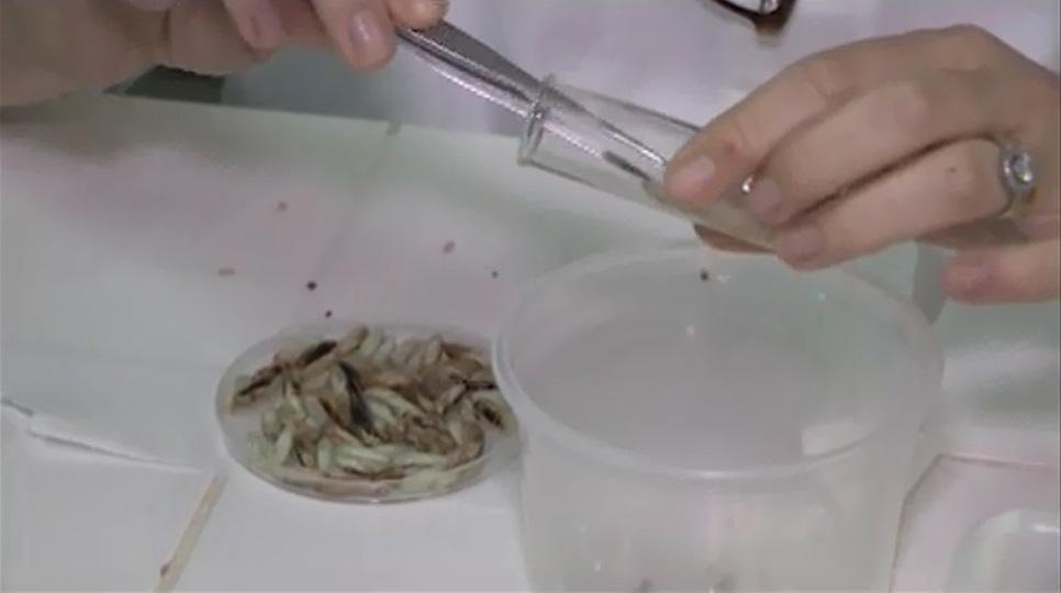 laboratorio-entomologia-embrapa-agrossilvipastoril