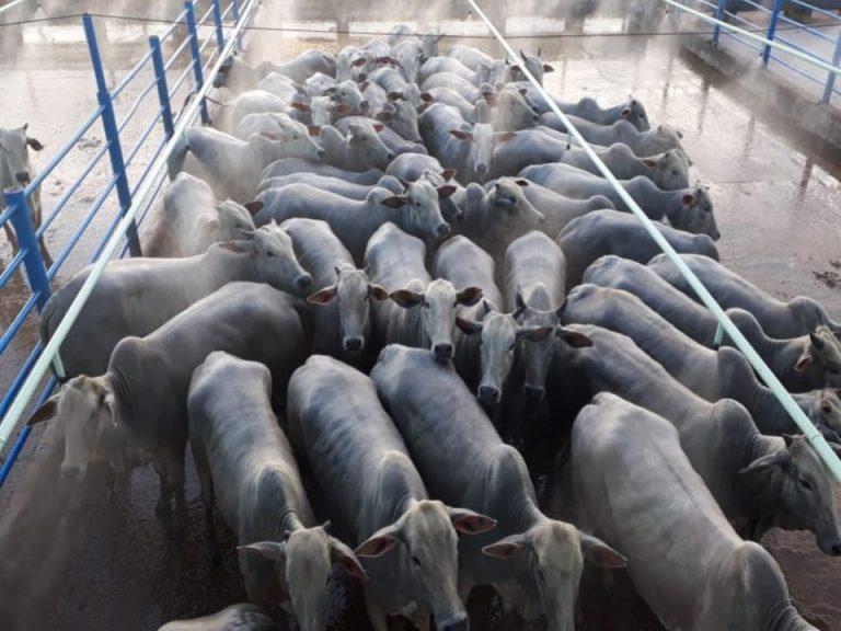 30-04 - COLIDER - Gison mueller berneck - Fazenda Beira Rio (3)