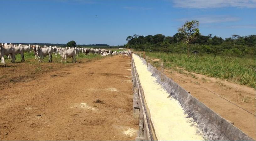 cocho-sustentavel-borrachao-fazenda-umuarama-paranaita-mt