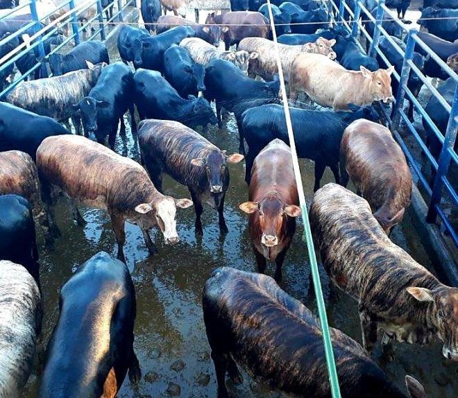26-06 - PONTES E LACERDA - Fazenda Santa Luzia Mun. Sao José dos Quatro Marcos