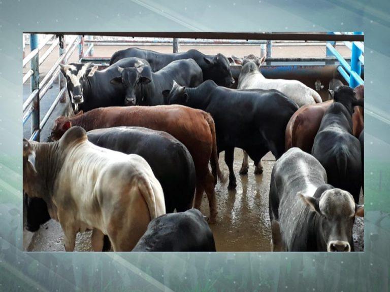 02-07 - LINS - Fazenda Piau – Dracena, SP