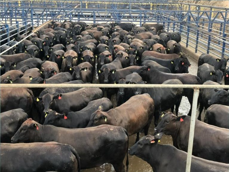 31-07 - BARRA DO GARÇAS - AFB Agropecuaria Fazenda Brasil