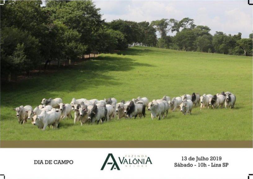 dia-de-campo-fazenda-valonia-2019