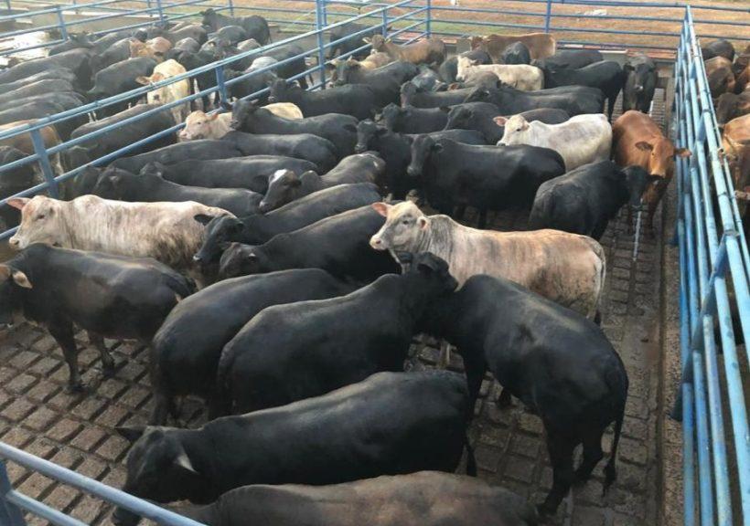 27-08 - COXIM - Fazenda Irmãos Tonial Sonora - MS