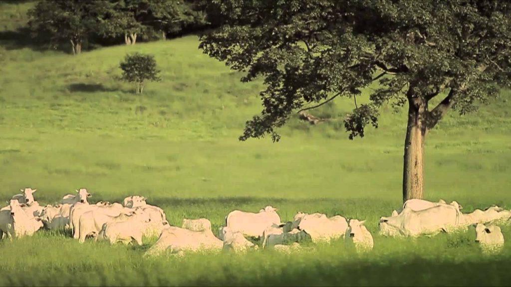 rancho-da-matinha-uberaba-mg-historia-eficiencia-alimentar-melhoramento-genetico