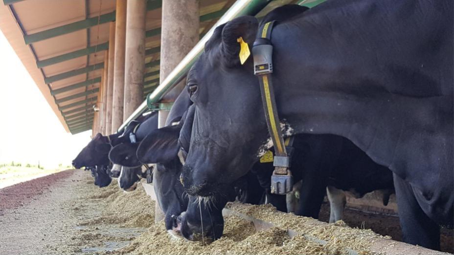 monitor-saude-vacas-app-celular-allflex
