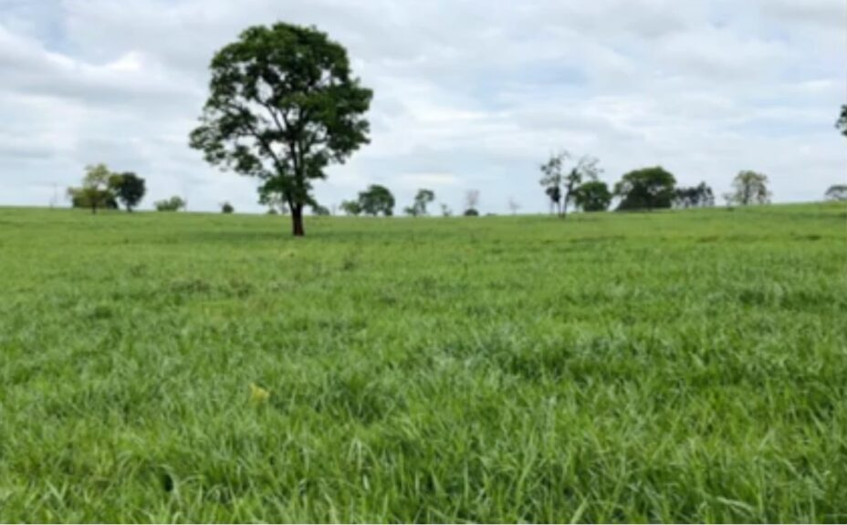 produtividade-terras-arenosas-fazenda-santa-lucia-ribas-do-rio-pardo-ms