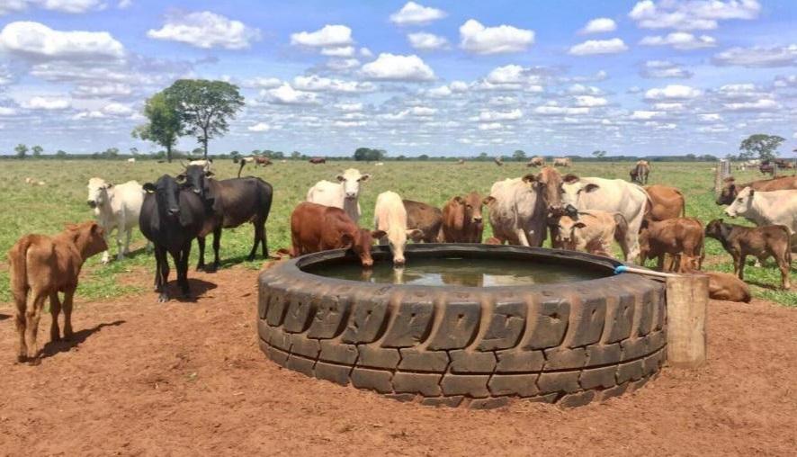 bebedouro-pneu-gigante-ecologico-duravel-rubber-tank