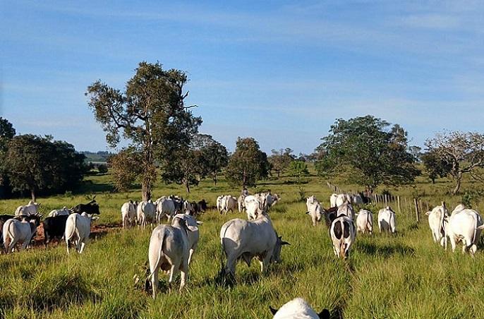 fazenda-barra-grande-mineiros-goias-evolucao-programa fazenda-nota-10 (1)