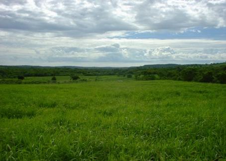 pastolimpo  exemplo de solo coberto